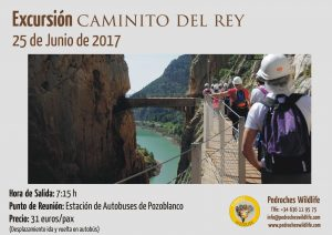 Pedroches_Wildlife_Caminito_del_Rey_Junio_2017_2a_Excursion